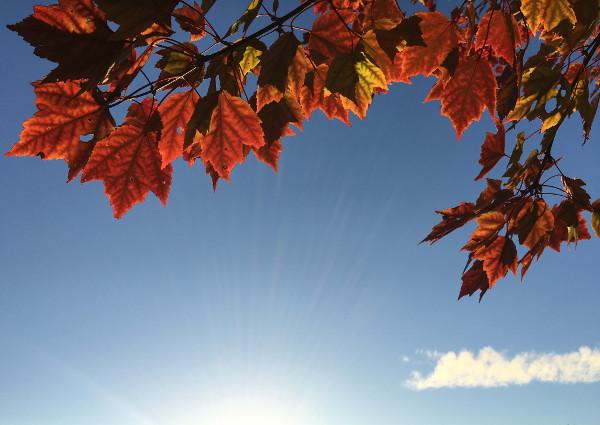 ciel-bleu-avec-des-feuilles-rouges-autonomnales