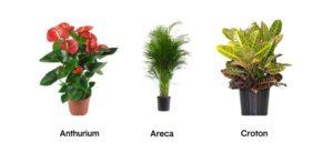 ensembles-de-plantes